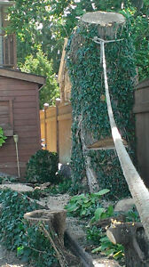 Tree trimming and removal Windsor Region Ontario image 3