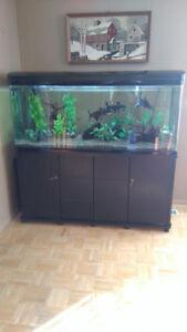 145 Gallon Aquarium with fish etc. (Freshwater)