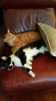 EXTRA SWEET NATURED CATS & KITTENS NEED LOVING HOMES!!!