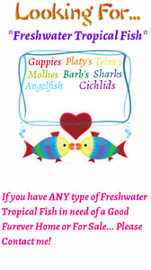 Looking for any freshwater tropical fish