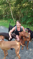 Dillman Dogwalking in Dartmouth and Cole Harbour