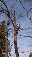 Art tree removal service