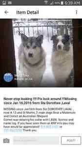 Two wonderful and great dogs lost help find