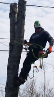 Insured tree removal 9024885500
