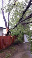 Beaver Bros tree removal storm damage clean up