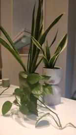Assorted indoor house plants