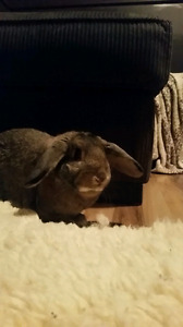Bunny for sale! Comes with cage! Price reduced!
