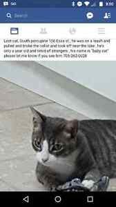 Missing kitty!!!