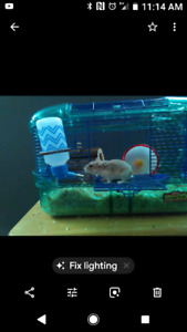 I have a Russian hamster with cage