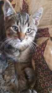 kittens to good home London Ontario image 2