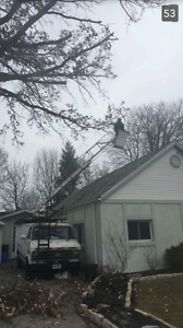 Spring Residential Tree Trimming (home care) Windsor Region Ontario image 6