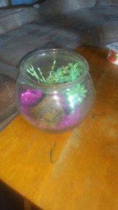 Fish bowl for sale