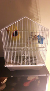 Budgie with cage+accessories