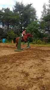 Entrainement pour cheval