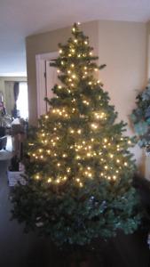 Christmas Tree - 6.5 feet tall (two)