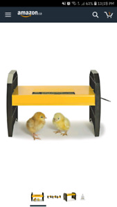 Looking for a chick brooder