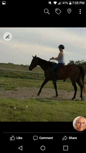 12 yr old OTTB gelding priced to sell