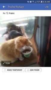 Lost cat: Paisley