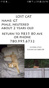 Missing orange tabby