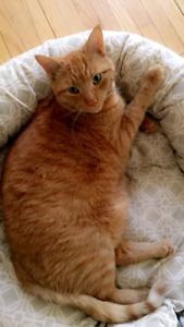 LOST GINGER CAT :( BURLINGTON
