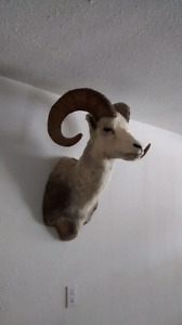 Stone sheep for sale.