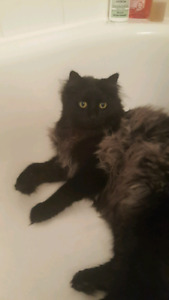 Looking for someone to feed my cat! [Saint-Henri, 3min à métro]