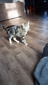 one year old cat for free