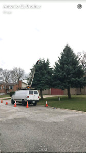 Spring Residential Tree Trimming (home care) Windsor Region Ontario image 4