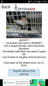some cats at animal services