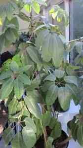 A Strong and Healthy Indoor Plant
