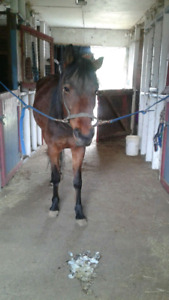 Horse Available for Part Lease