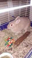 Female Rabbit for Sale (Cage,Food,Bedding,Accessories Included)