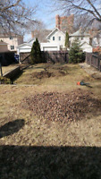 Complete yard cleaning