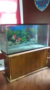 150 gallon tank and heavy wood stand/lid cover
