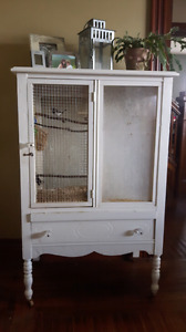 Society Finches & Antique Cage