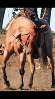 SP Horsemanship is accepting clients for spring/summer