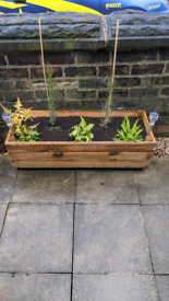 Two garden planters with plants