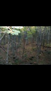 Terrain de 30 acres idéal pour la chasse