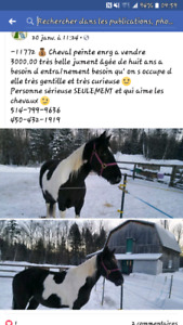 Cheval paint tobiano