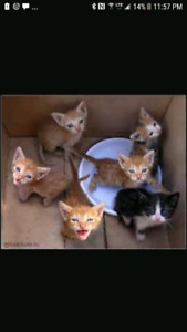 Looking for a kitten . Will go to very loving home