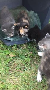 Free Cats and kittens