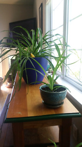Baby plant sharing/swapping
