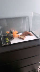 Leopard gecko and tank