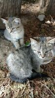 Three abandoned kittens to give away