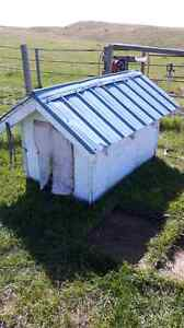 Dog house with tin roof