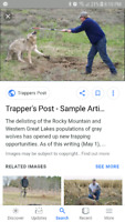 Wolf trapper needed