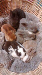 plusieurs lapins à vendre
