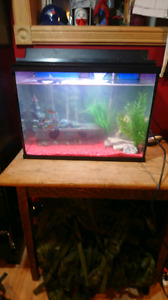 Tank/fish/accessories!!!!!  NEED GONE ASAP.  REDUCED