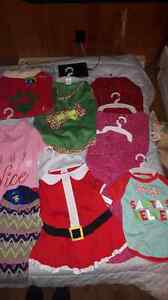 New Dog christmas outfits, harnesses and accessories