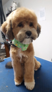 IN YOUR HOME DOG GROOMING